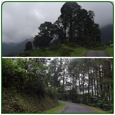 Pemandangan hijau menyegarkan sepanjang perjalanan